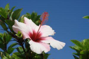 fiore con cielo sullo sfondo